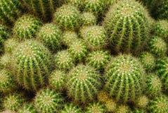 Grupo de cactus Foto de archivo libre de regalías