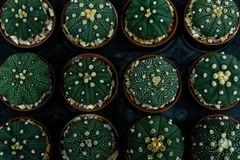 Grupo de cactus en un pote imagenes de archivo