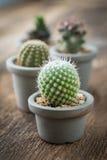 Grupo de cactus encendido en el fondo de madera fotografía de archivo