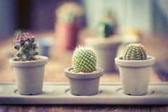 Grupo de cactus encendido en el fondo de madera foto de archivo