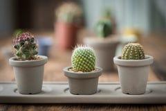 Grupo de cactus encendido en el fondo de madera imagenes de archivo