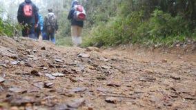 Grupo de caminantes multirraciales que caminan a lo largo de la trayectoria de bosque Turistas con las mochilas que caminan en el Imágenes de archivo libres de regalías