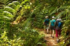 Grupo de caminhada dos trekkers através da selva verde imagens de stock