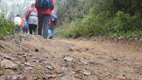 Grupo de caminhantes multirraciais que andam ao longo do trajeto de floresta Turistas com as trouxas que caminham no passeio atra Fotografia de Stock