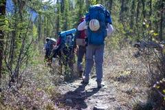 Grupo de caminhantes que caminham na floresta que caminha em Alaska imagens de stock