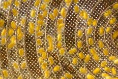 Grupo de capullos del gusano de seda Imagen de archivo libre de regalías