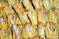 Grupo de carne de peixes secada Fotografia de Stock