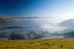 Grupo de carneiros que pastam a grama em um monte Imagens de Stock