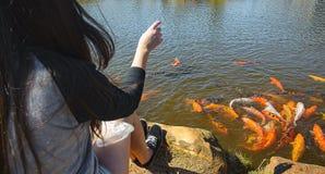 Grupo de carpas coloridas que nadam em um lago que está sendo alimentado por uma menina Fotografia de Stock Royalty Free