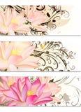 Grupo de cartões com flores de lótus e ornamento do redemoinho Fotos de Stock Royalty Free