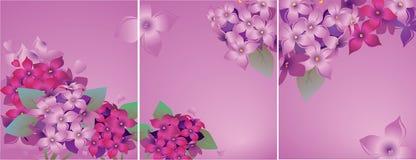 Grupo de cartões com lilás Imagens de Stock Royalty Free