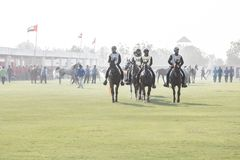 Grupo de cavalos árabes que preparam-se para uma raça de resistência fotos de stock