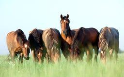 Grupo de cavalos no campo Foto de Stock Royalty Free