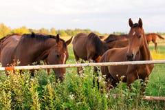 Grupo de cavalos no pasto foto de stock royalty free