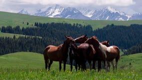 Grupo de cavalos nos montes vídeos de arquivo
