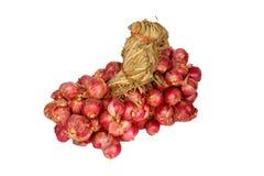 Grupo de cebola vermelha Imagens de Stock Royalty Free