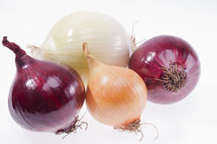 Grupo de cebolas coloridas isoladas no fundo branco Fotografia de Stock Royalty Free