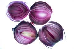 Grupo de cebolas cortadas do bulbo Imagens de Stock