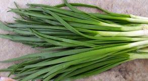 Grupo de cebolas verdes Imagem de Stock Royalty Free