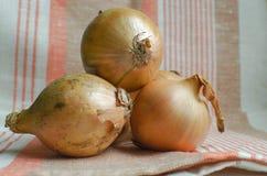 Grupo de cebollas frescas fotografía de archivo libre de regalías