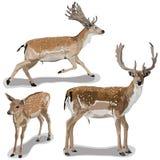 Grupo de cervos ilustração stock