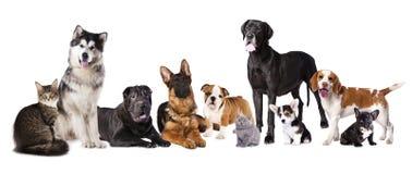 Grupo de cães e gato Fotos de Stock Royalty Free