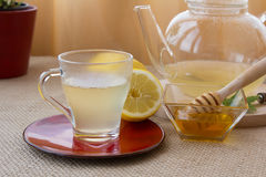 Grupo de chá da infusão do Camomila-estragão Fotografia de Stock