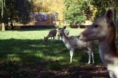 Grupo de ciervos imágenes de archivo libres de regalías