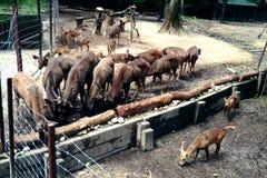 Grupo de ciervos Fotografía de archivo