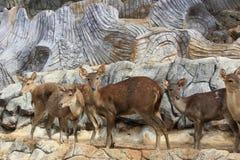 Grupo de ciervos del cervatillo Imágenes de archivo libres de regalías