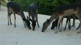 Grupo de ciervos que alimentan delante de un mesón