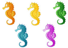 Grupo de cinco cavalos de mar multi-coloridos Imagens de Stock Royalty Free