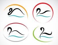 Grupo de cisnes ilustração stock