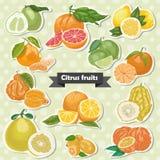 Grupo de citrinas isoladas da etiqueta ilustração do vetor