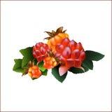 Grupo de cloudberries da floresta e da amora de pedra ilustração royalty free