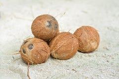 Grupo de cocos marrons pequenos na areia foto de stock royalty free