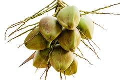 Grupo de cocos novos no fundo branco do isolado da árvore com trajeto de grampeamento Fotografia de Stock