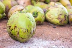 Grupo de cocos verdes Fotos de archivo libres de regalías