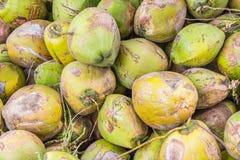 Grupo de cocos verdes Fotos de archivo