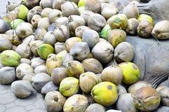 Grupo de cocos viejos Foto de archivo