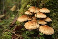 Grupo de cogumelo bonito em uma floresta imagem de stock royalty free
