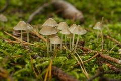 Grupo de cogumelos Fotos de Stock