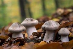 Grupo de cogumelos Foto de Stock Royalty Free