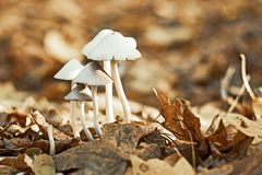 Grupo de cogumelos brancos pequenos Fotos de Stock Royalty Free