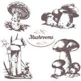 Grupo de cogumelos dos desenhos Imagens de Stock Royalty Free