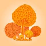 Grupo de cogumelos fantásticos alaranjados Fungo alaranjado dos desenhos animados Mão ilustração stock