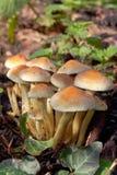 Grupo de cogumelos no outono Fotografia de Stock