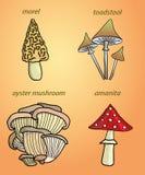 Grupo de cogumelos pintados do vetor Foto de Stock