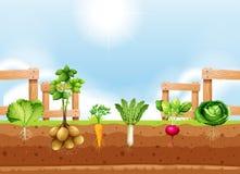 Grupo de colheita vegetal diferente ilustração royalty free
