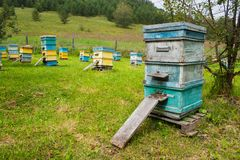 Grupo de colmeias coloridas completamente das abelhas no no prado imagens de stock royalty free